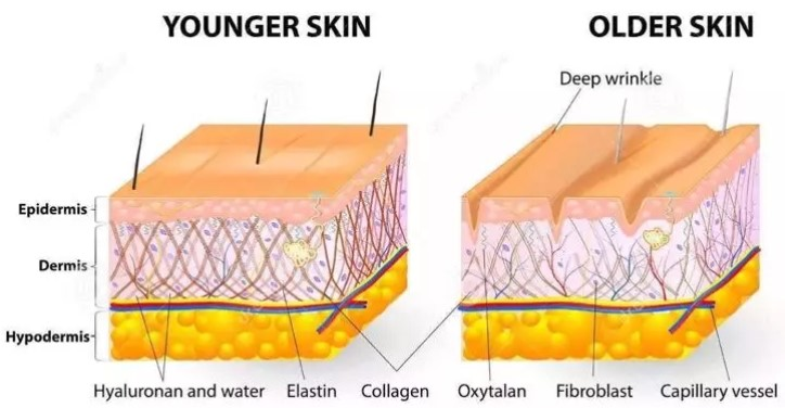 Oilyskinbeauty Young skin and aging skin