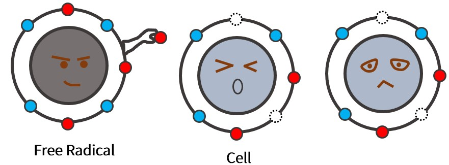 The method for free radicals to attack cells is to take away electrons from cell atoms