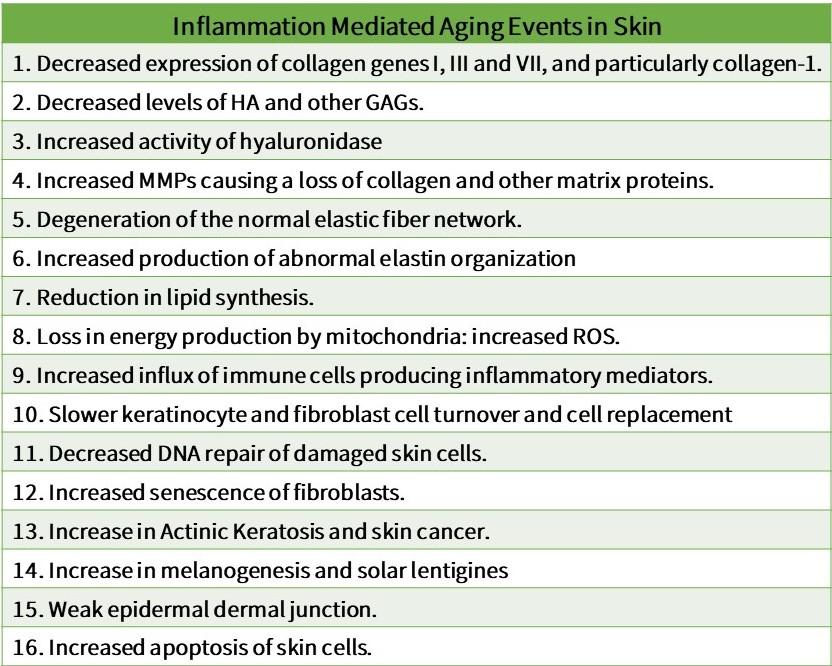 Oilyskinbeauty Inflammation mediated aging events in skin