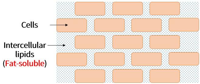Oilyskinbeauty Intercellular lipids Fat soluble