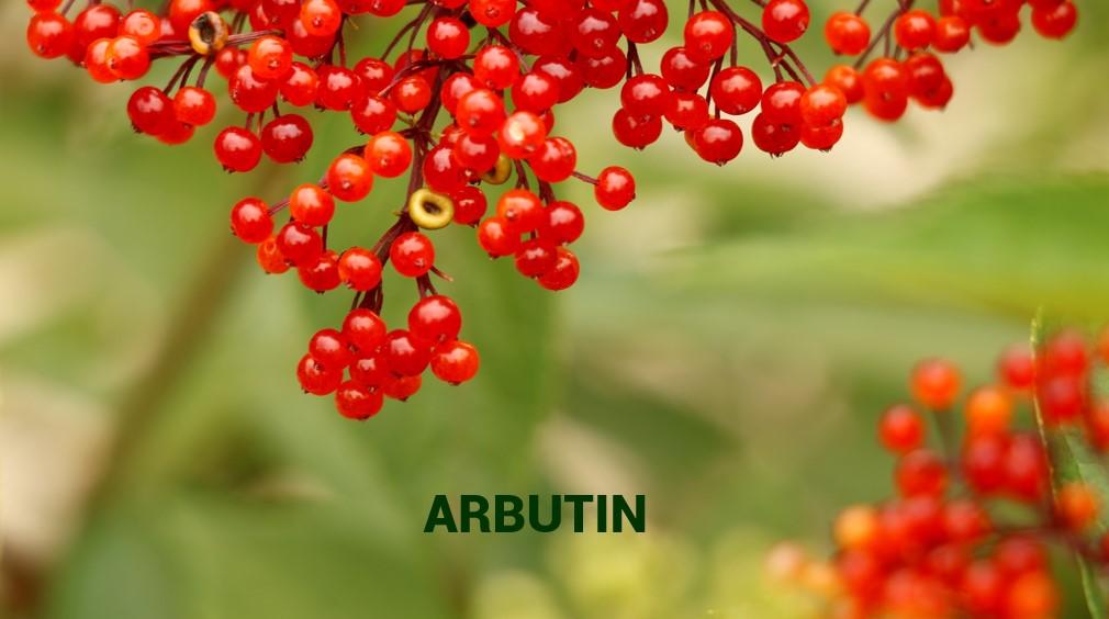 Oilyskinbeauty Arbutin