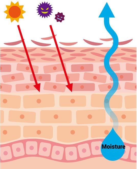 Oilyskinbeauty Moisture loss after skin barrier is damaged