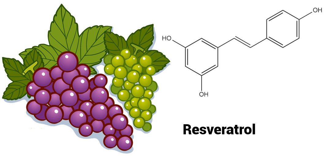 The chemical formula of resveratrol. Resveratrol is commonly found in grapes.
