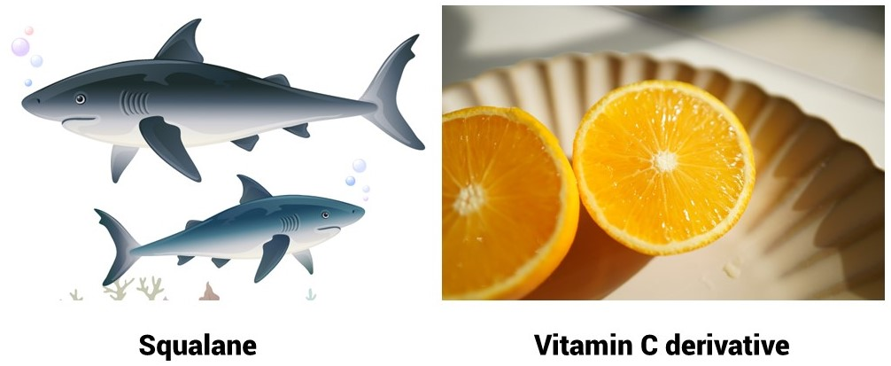 Oilyskinbeauty Squalane and Vitamin C
