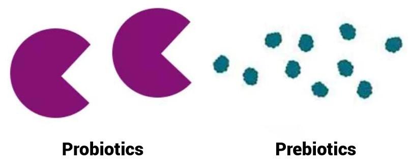 Oilyskinbeauty Probiotics feed on prebiotics