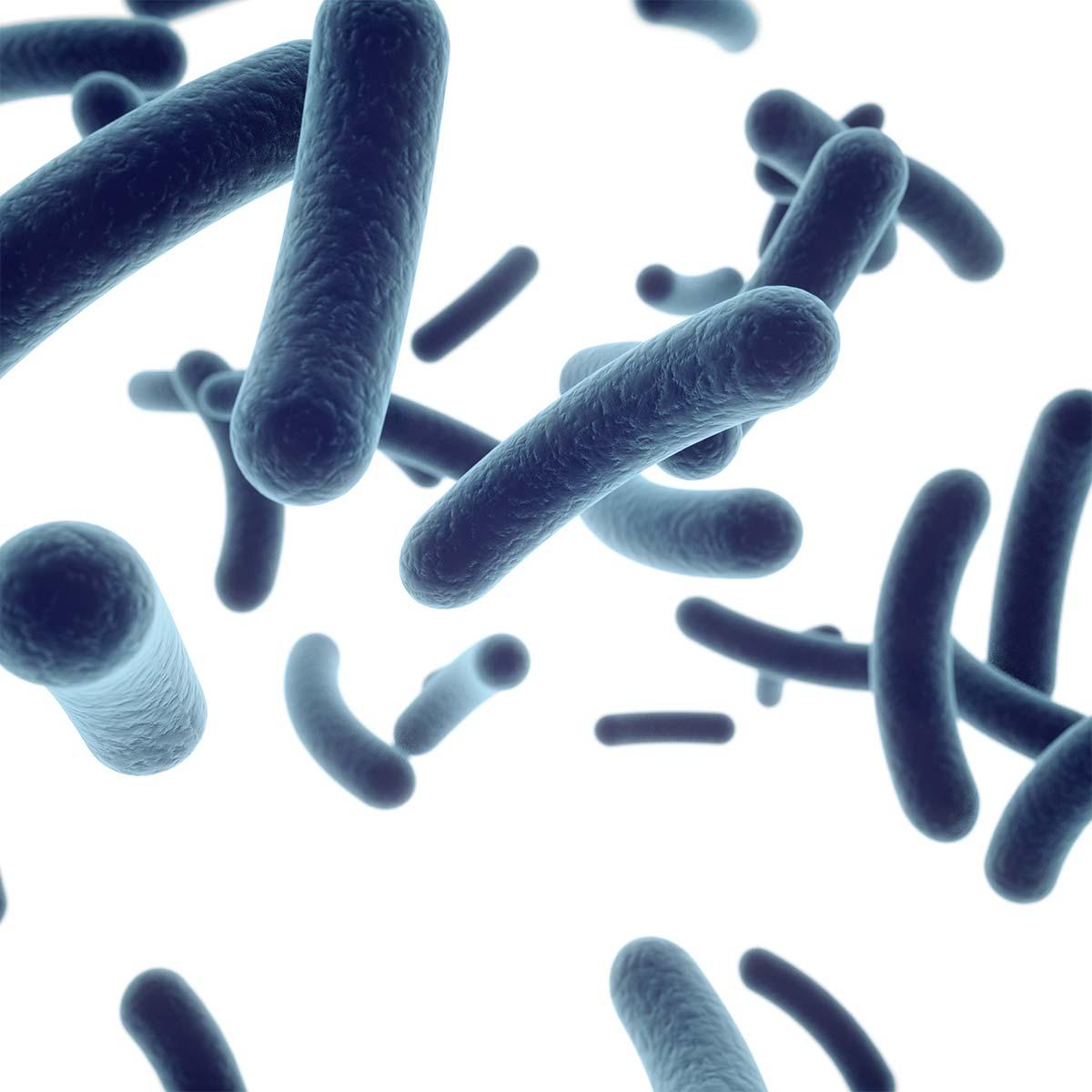 Skin Microecology Profile